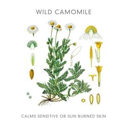 Abloom Hydrating Toner Wild Camomile
