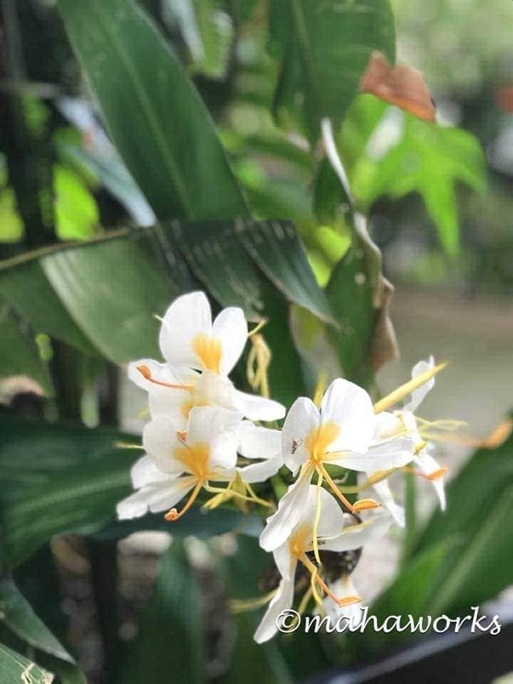 chiuri flowers