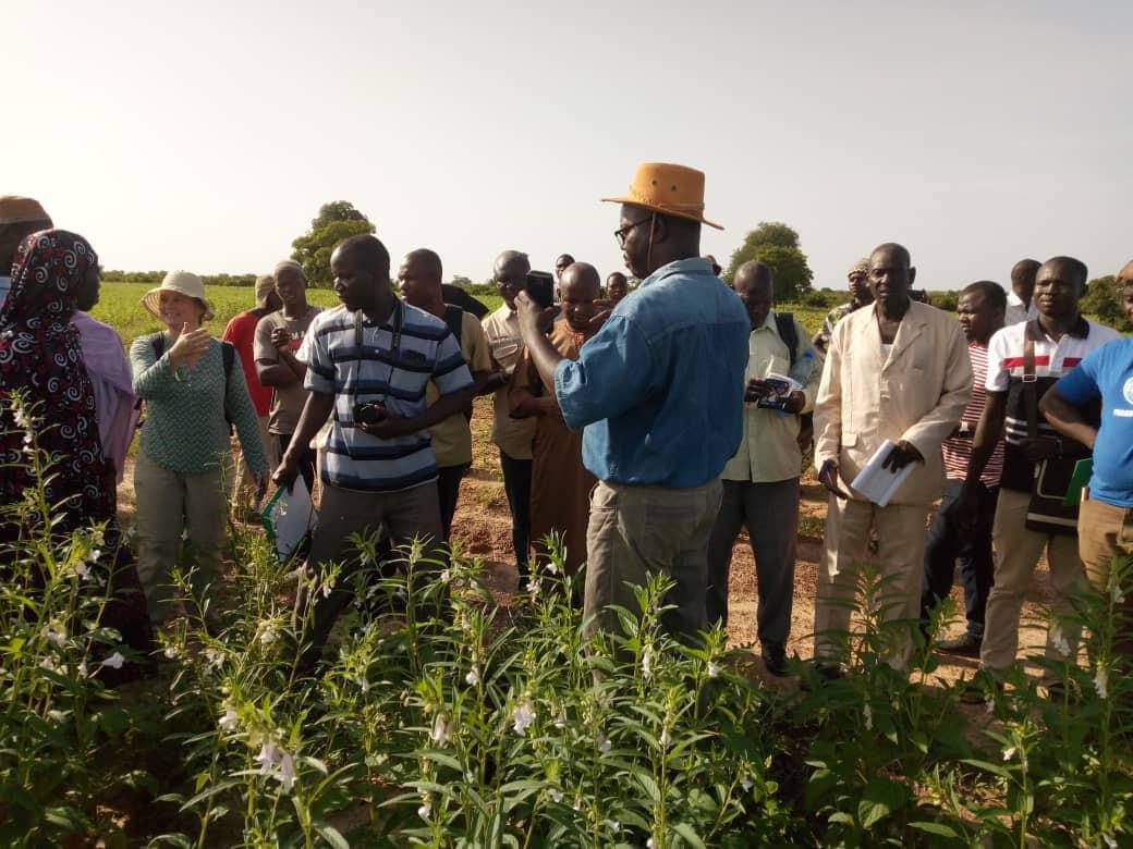 Emile Noel tours a sesame farm in Mali