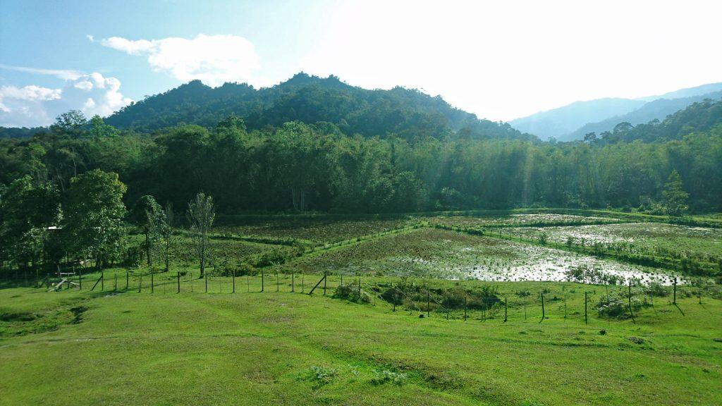Pa Lungan paddy field landscape