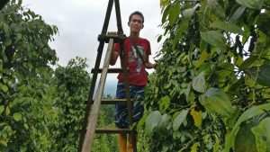 Langit pepper farmer silan