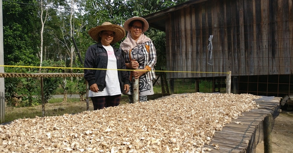 Yulian and Marini showing how they dry Langit ginger