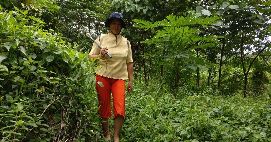 Langit farmer looking for ginger in the jungle